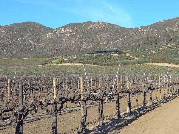 bodegas de vino Ensenada