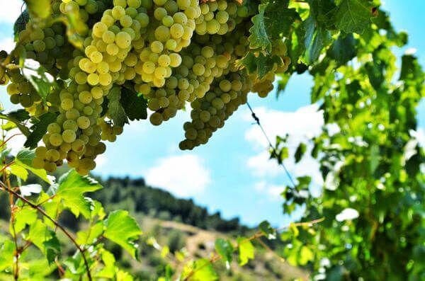 rutas del vino francia