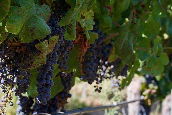 turismo del vino chile