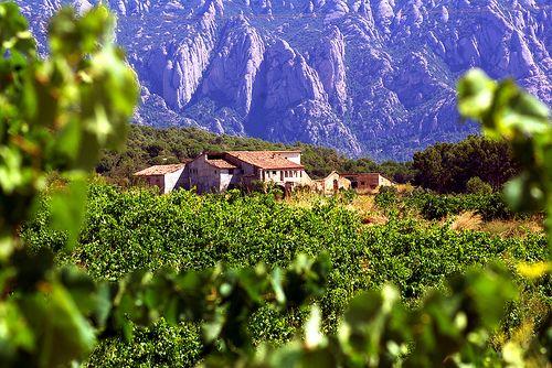 vinos cataluña
