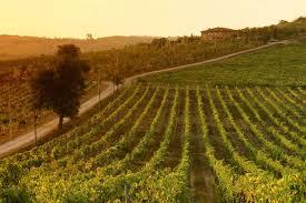 vinos de la toscana
