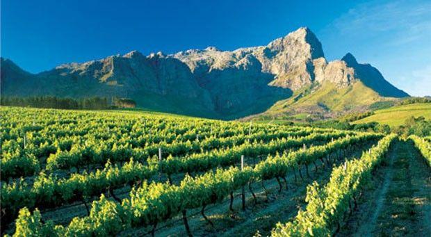 vinos de sudafrica